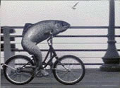 fish-bicycle.jpg